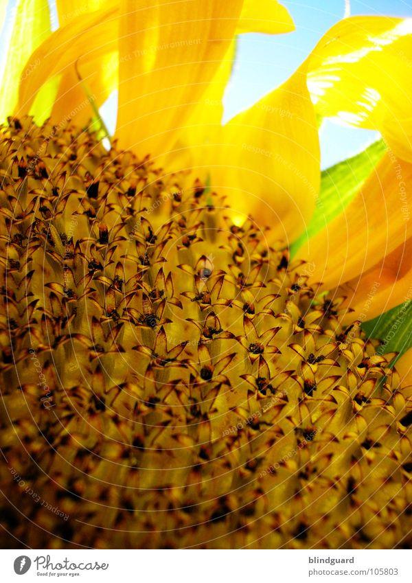 So many little flowers grün blau Pflanze Sommer gelb Lampe oben Blüte Garten Haare & Frisuren Beleuchtung klein Wassertropfen nass hoch Perspektive