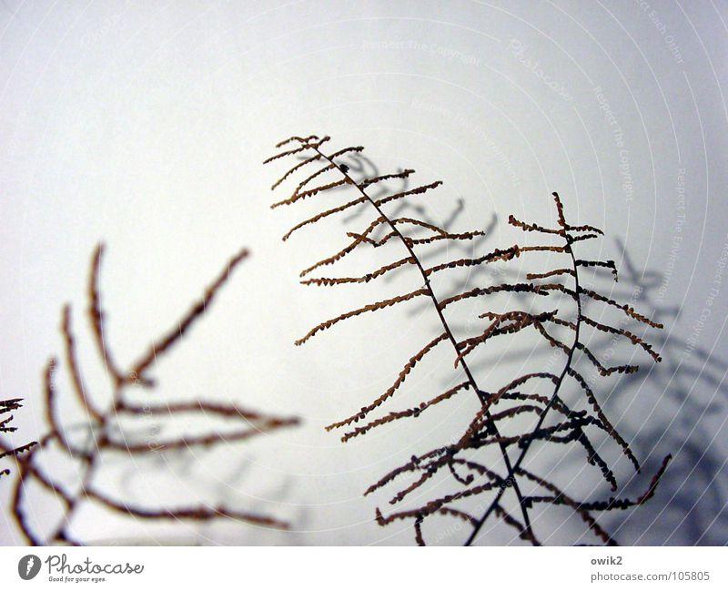 Sonett schön natürlich klein Zusammensein Dekoration & Verzierung elegant authentisch verrückt einfach viele nah zart Zweig dünn bizarr filigran