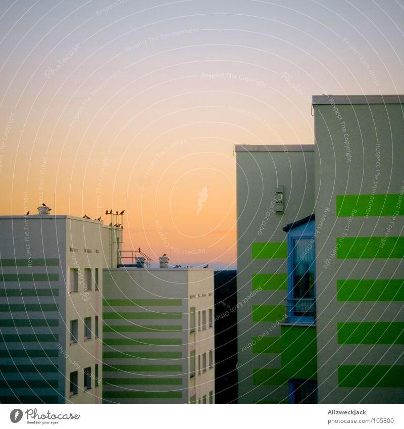 Plattenromantik Sonne blau orange Vogel Deutschland Beton Hochhaus modern Romantik DDR Fernweh schick Plattenbau Potsdam