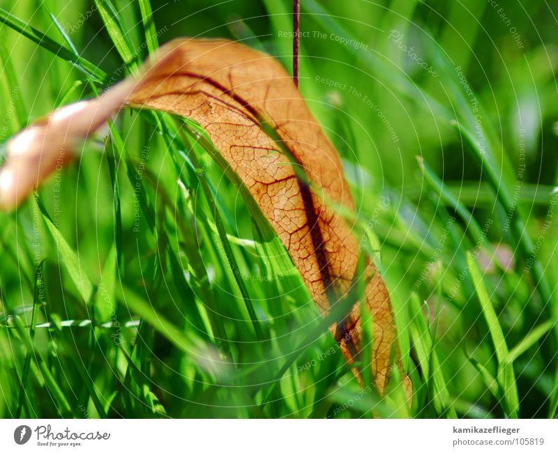 blutgefäße oder blattgefäße Herbst Blatt Gras Wiese grün gelb Gefäße aterie Blut pulsieren Tod