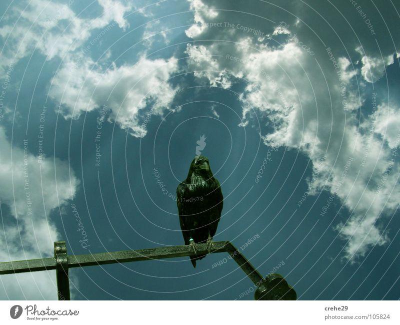Kuckst du weiter Natur Himmel Sonne blau Sommer Wolken Landschaft Vogel Aussicht beobachten Rabenvögel Krähe