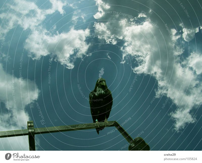 Kuckst du weiter Sonnenstrahlen Sommer Wolken Himmel Vogel Krähe Rabenvögel Aussicht Natur Blick clouds sky blau Landschaft Kontrast beobachten crow