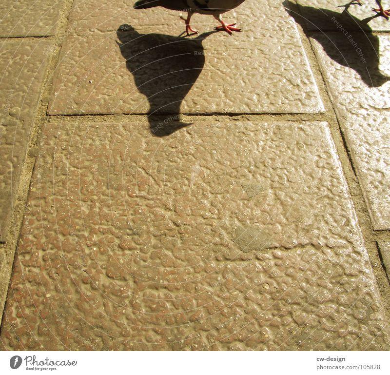 ratten der lüfte Vogel Taube Silhouette Schatten Textfreiraum unten Textfreiraum Mitte Anschnitt Bildausschnitt Detailaufnahme Krallen Bodenplatten Steinplatten