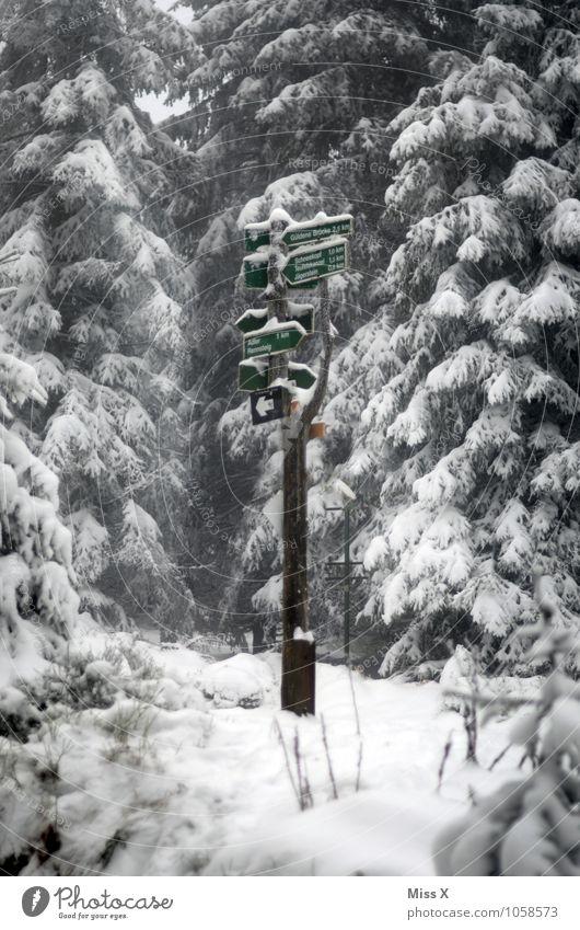 Wegweiser Baum Einsamkeit Winter Wald kalt Wege & Pfade Schnee Stimmung Tourismus Freizeit & Hobby Schneefall Wetter Eis Ausflug wandern trist