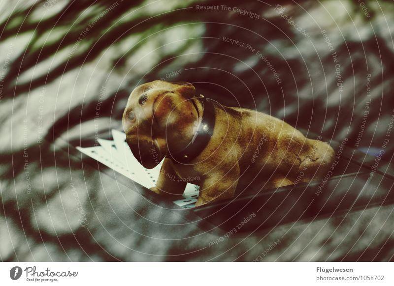 Hundeblick Lifestyle Freizeit & Hobby Spielen Tier Haustier 1 Jagd wackeln Wackeldackel Dackel Hundekopf Hundehalsband Hundeauge Hunderennen Hundemarke
