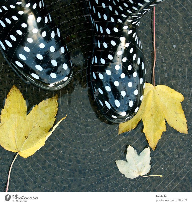 Ja ist denn heut schon Herbst? Blatt Herbstlaub fallen gelb Pfütze nass Stiefel Gummistiefel gepunktet weiß schwarz glänzend Fröhlichkeit mehrfarbig Asphalt