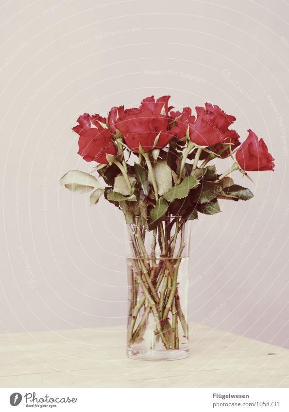 Happy Hochzeitstag Hochzeitstag (Jahrestag) Blume Pflanze Blumenvase Stillleben Blühend Blüte Duft Geruch Dorn Rose