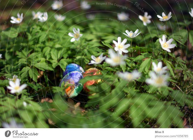 Ostereier Lebensmittel Ernährung Ostern Frühling Blume Blatt Blüte Garten mehrfarbig Buschwindröschen Waldboden Blumenwiese Osternest Nest Ei Hühnerei Farbe