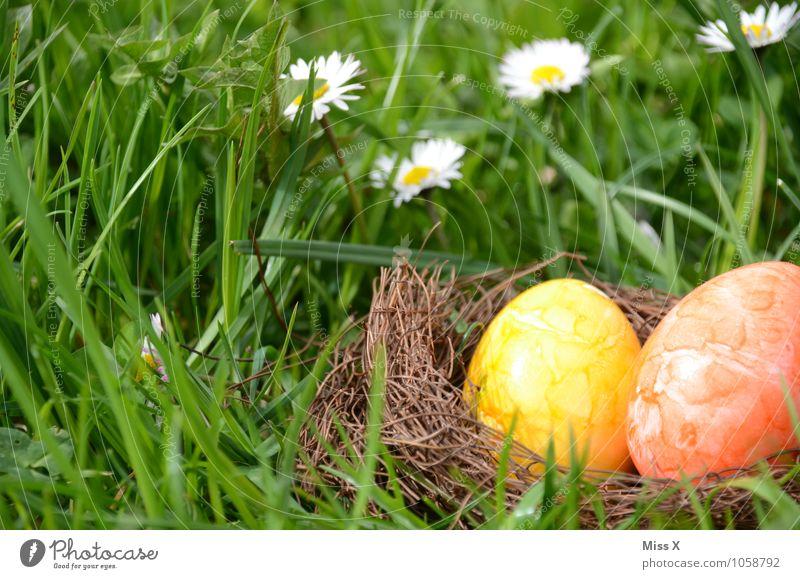 im Gras Lebensmittel Ernährung Garten Ostern Frühling Blüte Wiese mehrfarbig gelb Osternest Osterei Nest Gänseblümchen Versteck verstecken finden Suche 2 Ei
