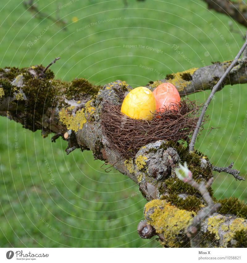 Eiersuche Natur Farbe Baum Wiese Frühling Garten Lebensmittel Ernährung Ast Ostern Suche Zweig Moos finden Nest