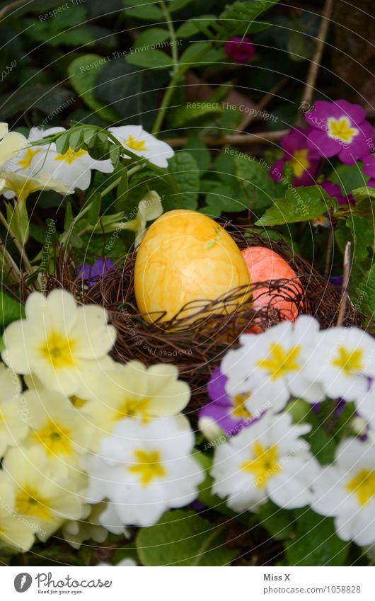In den Primeln Farbe Blume Blüte Frühling Feste & Feiern Lebensmittel Ernährung Ostern Suche verstecken Ei finden Nest Osterei Primelgewächse Osternest