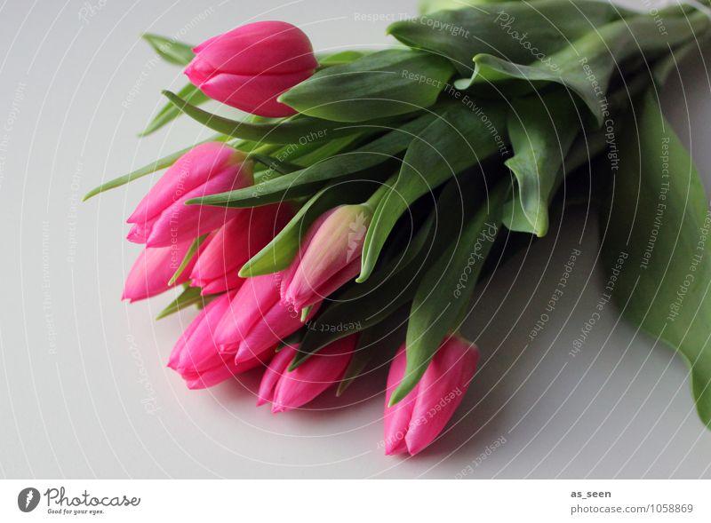 Tulpenstrauss Pflanze grün Farbe Blume Blatt Leben Frühling Blüte Feste & Feiern Garten rosa Lifestyle liegen leuchten Design frisch