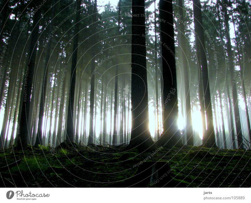 ....8:48....... Wald Licht Sonnenaufgang Baum Erkenntnis UFO Nebel blenden Angst Panik Herbst Spessart Lichtstrahl Graffiti Beginn jarts