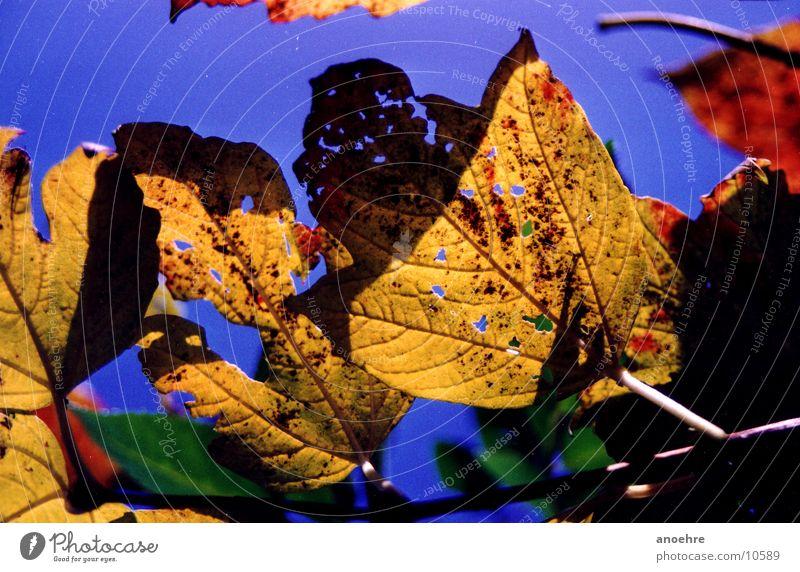 Herbstblätter Natur Blatt
