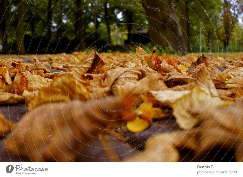 Es wird Herbst... Freude Spielen Sommer Winter Natur Pflanze Tier Erde Baum Gras Blatt Park Wiese Wald Traurigkeit dreckig unten braun gelb grün rot Stimmung
