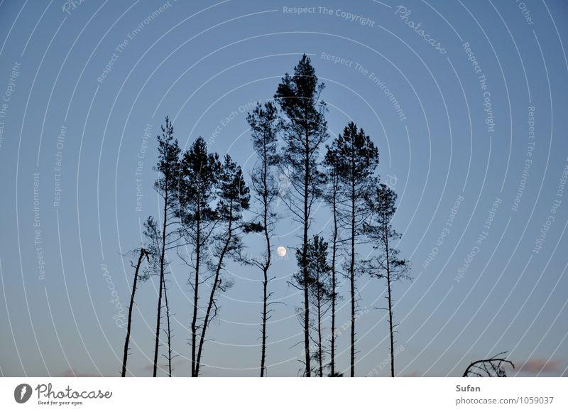 Kahlschlagromantik Himmel Natur blau Baum schwarz Wald kalt Umwelt grau oben bedrohlich Romantik Landwirtschaft Wolkenloser Himmel Umweltschutz Baumkrone
