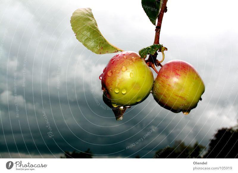 Regenäpfel Baum grün rot Blatt Wolken Leben dunkel grau Traurigkeit Wassertropfen Frucht frisch Trauer Apfel verloren
