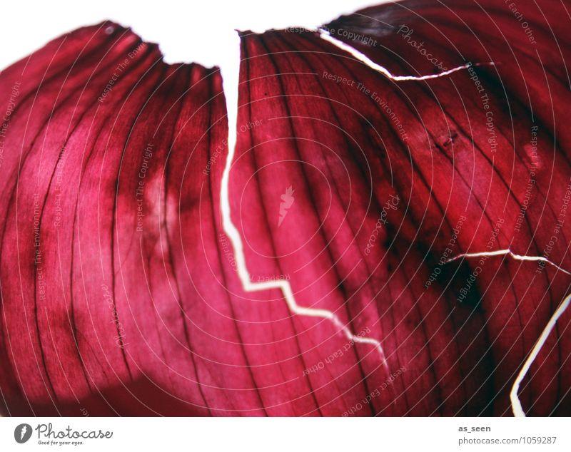 Häutung Natur Pflanze Farbe rot Lebensmittel Design leuchten elegant ästhetisch kaputt Küche Tierhaut Wellness trocken Gemüse Gemälde
