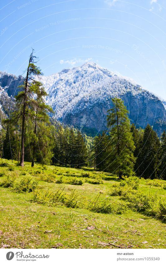 Kalter Frühling Ferien & Urlaub & Reisen Tourismus Ausflug Abenteuer Natur Landschaft Pflanze Schönes Wetter Schnee Baum Gras Sträucher Wildpflanze