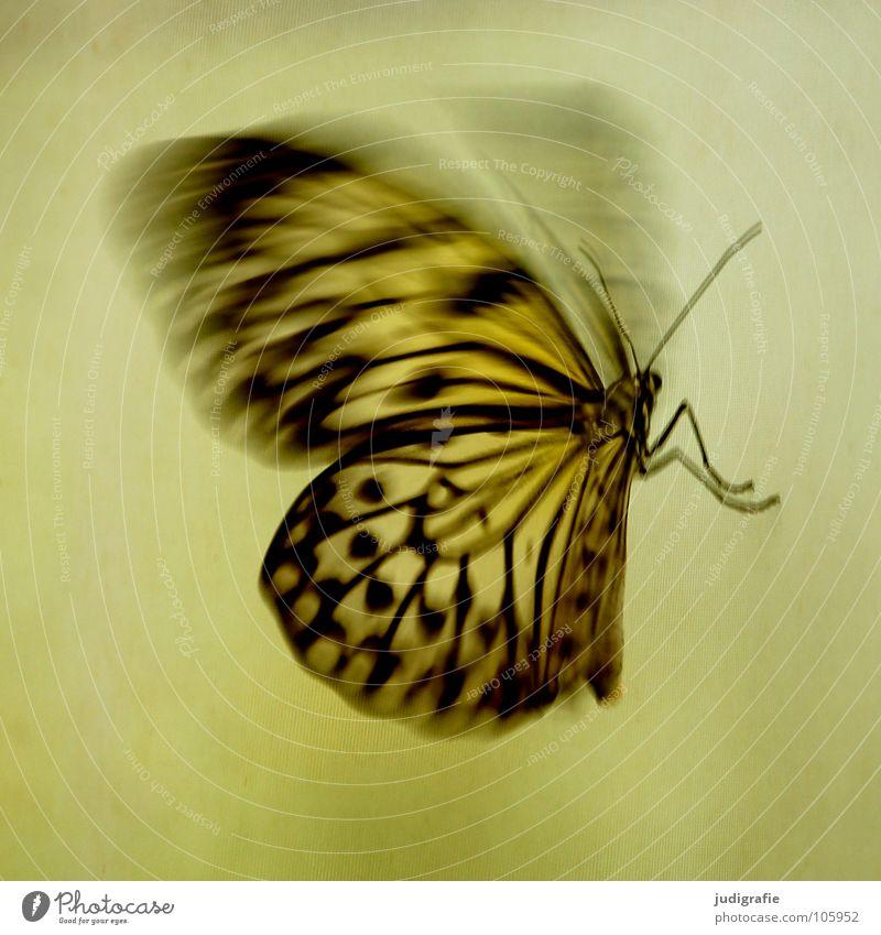 Schmetterling Muster Insekt Fühler flattern schön Tier Flügel Bewegung Dynamik Strukturen & Formen fliegen Beine Natur