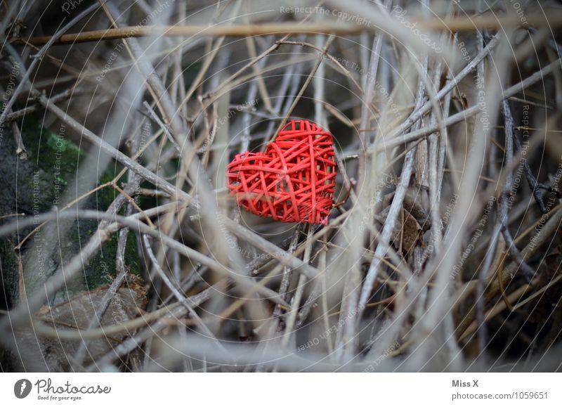 Herz versteckt Valentinstag Pflanze Sträucher Gefühle Stimmung Liebe Verliebtheit Liebeskummer Liebesaffäre verborgen Ast Zweig durcheinander geflochten