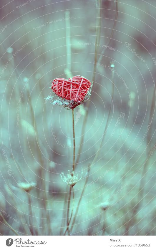 Herz Natur Pflanze rot Gefühle Liebe Gras Stimmung Dekoration & Verzierung Sträucher Ast Romantik Zweig Verliebtheit Valentinstag Zweige u. Äste