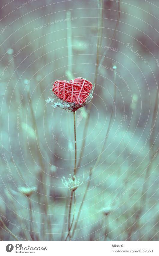 Herz Valentinstag Natur Pflanze Gras Sträucher Dekoration & Verzierung rot Gefühle Stimmung Liebe Verliebtheit Romantik Ast Zweig Zweige u. Äste Liebeserklärung