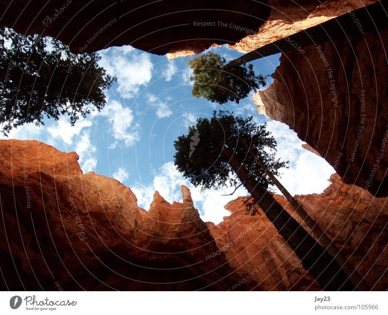 Skyview - dem Lichte empor Himmel Natur Baum rot Ferien & Urlaub & Reisen Wald Berge u. Gebirge Stein Ausflug USA entdecken Vergangenheit Aussicht Amerika
