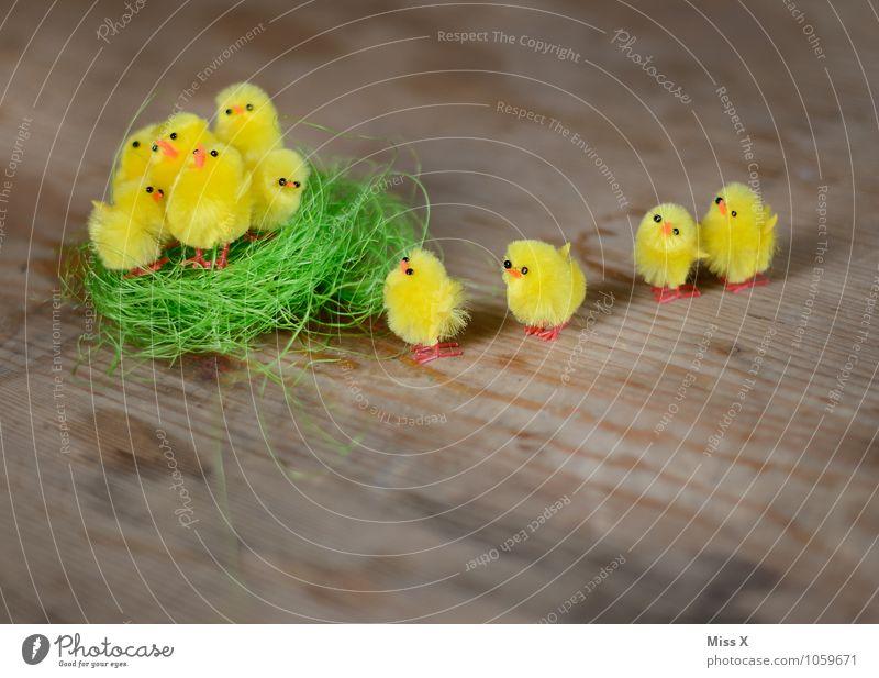 Ab ins Nest Ostern Vogel Tiergruppe Tierjunges klein niedlich Gefühle Stimmung Sicherheit Schutz Geborgenheit Freundschaft Zusammensein Team Teamwork