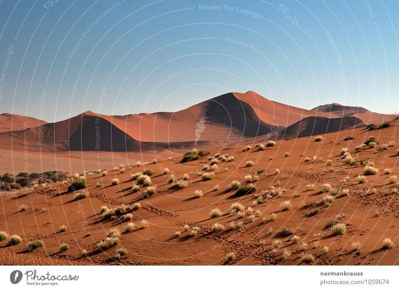 Namib Wüste, Namibia Ferne Safari Natur Landschaft Sand Wolkenloser Himmel Schönes Wetter Wärme Dürre Gras heiß braun Ferien & Urlaub & Reisen Dünengras