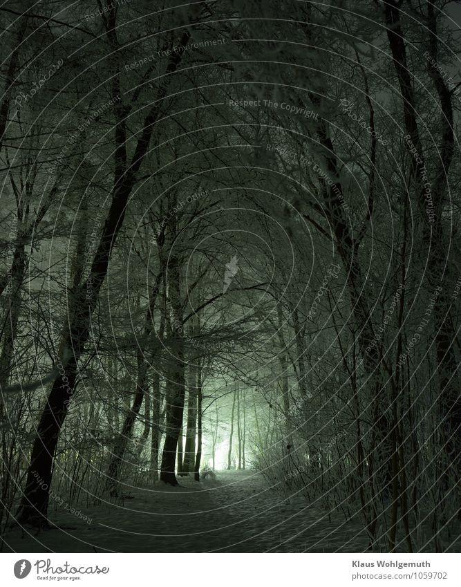Wegweiser Erholung Umwelt Natur Landschaft Pflanze Winter Eis Frost Schnee Baum Sträucher Park Wald Salow Dorf Wege & Pfade frieren blau grau schwarz weiß ruhig