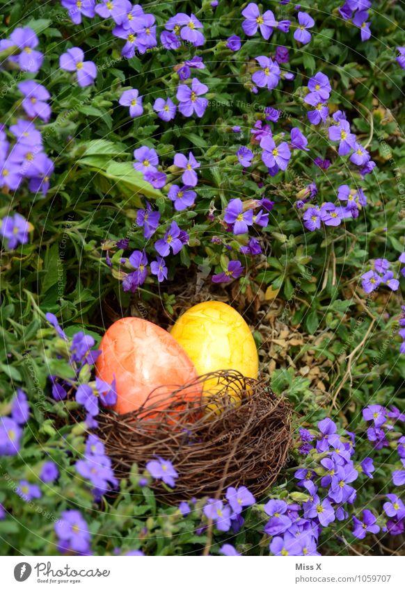 gesucht und gefunden Lebensmittel Ernährung Garten Ostern Frühling Schönes Wetter Blume Blüte mehrfarbig Osternest Osterei Ei Hühnerei Farbe Nest finden Suche
