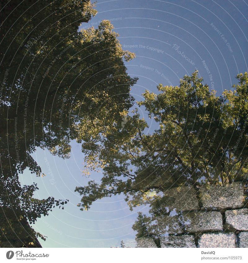 Kopfsteinbäume Baum Blatt grün Kopfsteinpflaster Pfütze Reflexion & Spiegelung Garten Park Straße Wege & Pfade Wasser Surrealismus Himmel blau Schönes Wetter