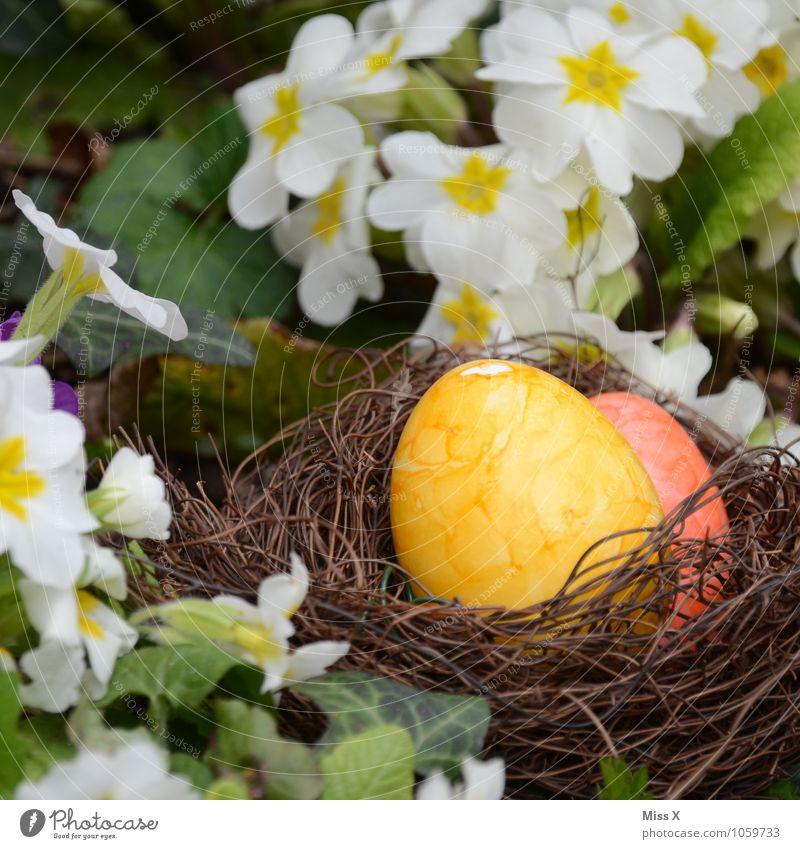 Nest Lebensmittel Ernährung Ostern Frühling Blume Blüte Garten mehrfarbig Osterei Osternest Kissen-Primel Ei Hühnerei Farbe verstecken Eiersuche Farbfoto