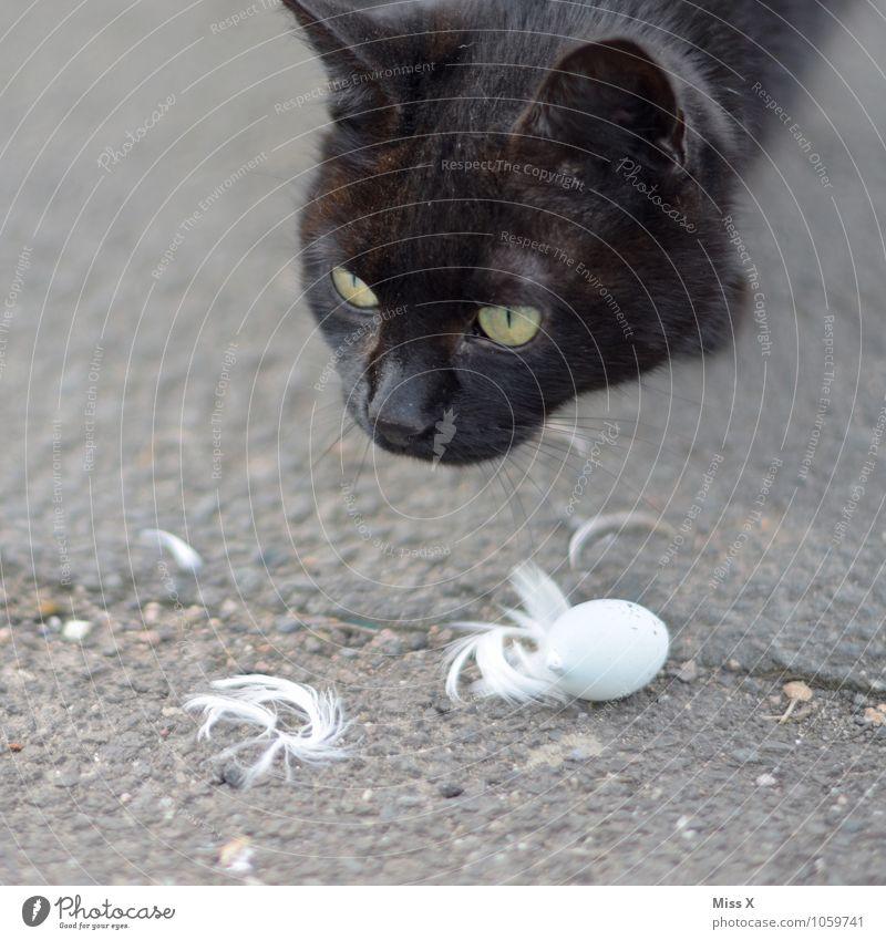 Spurensuche Katze Tierjunges Gefühle Stimmung Vogel Feder gefährlich Todesangst Appetit & Hunger Haustier Fressen Interesse gefräßig Katzenkopf Vogeleier