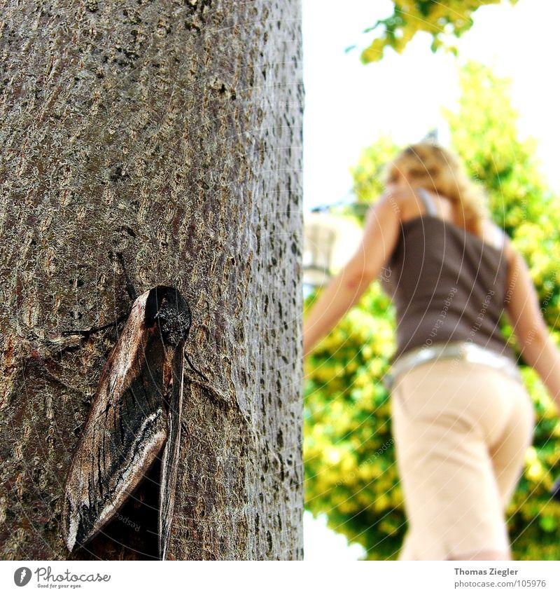 Day and/at Night, oder der heimliche Beobachter Nacht dunkel Schmetterling Baum geheimnisvoll Verschiedenheit Publikum Sommer Makroaufnahme Nahaufnahme Kontrast