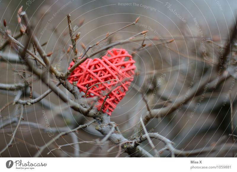 Gefangen Valentinstag Frühling Winter Sträucher Herz Gefühle Stimmung Liebe Verliebtheit Liebeskummer Einsamkeit Dorn gefangen Ast Zweig Zweige u. Äste Farbfoto