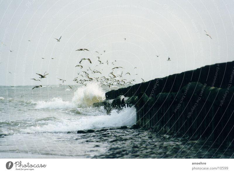 Möwengruppe Meer Vogel Nordsee Brandung Wangerooge