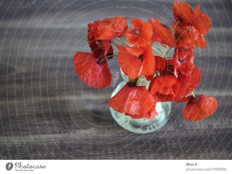 Mohn Sommer rot Blume Gefühle Blüte Stimmung Dekoration & Verzierung Blühend Blumenstrauß Müdigkeit Liebeskummer Erschöpfung Vase verblüht dehydrieren