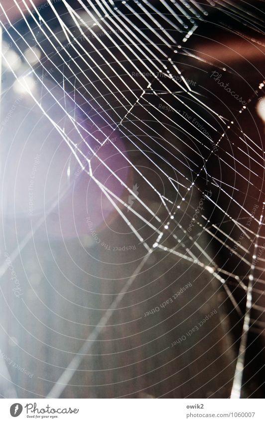 Maschendraht Umwelt Natur Tier glänzend leuchten dünn authentisch einfach fest bedrohlich gefährlich Netz Blendenfleck Spinnennetz Spinngewebe beweglich dehnbar