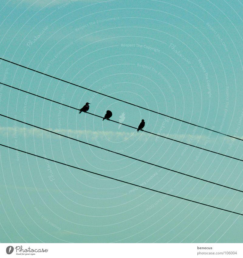 Drillinge an Bord Vogel Elektrizität Hochspannungsleitung diagonal hocken 3 4 türkis Kondensstreifen Herbst Sammlung Vogelschwarm Zugvogel Ornithologie
