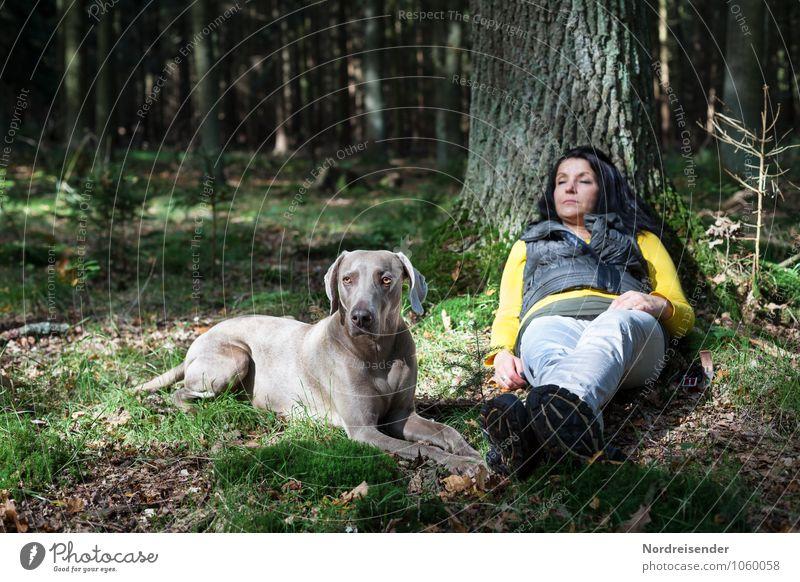 Aufpassen Hund Mensch Frau Baum Erholung ruhig Tier Wald Erwachsene Leben feminin Zusammensein Freundschaft Zufriedenheit wandern Ausflug