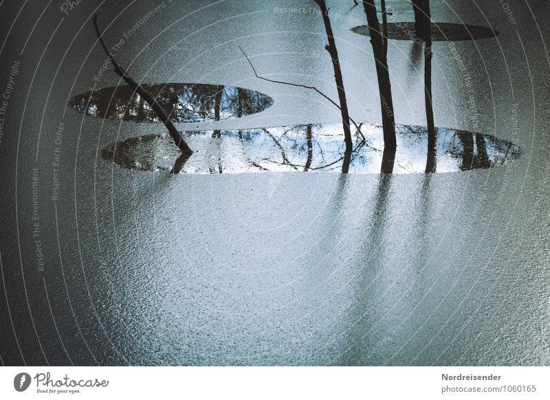 Winter im Moor Natur blau Pflanze Wasser Baum Landschaft ruhig dunkel kalt See Eis Wetter Klima Frost fest