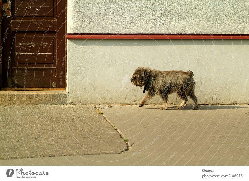 Hallo Nachbar Hund Wand Haus Eingang Säugetier Vergänglichkeit Verkehrswege Promenadenmischung Tür Straße Straßenhund