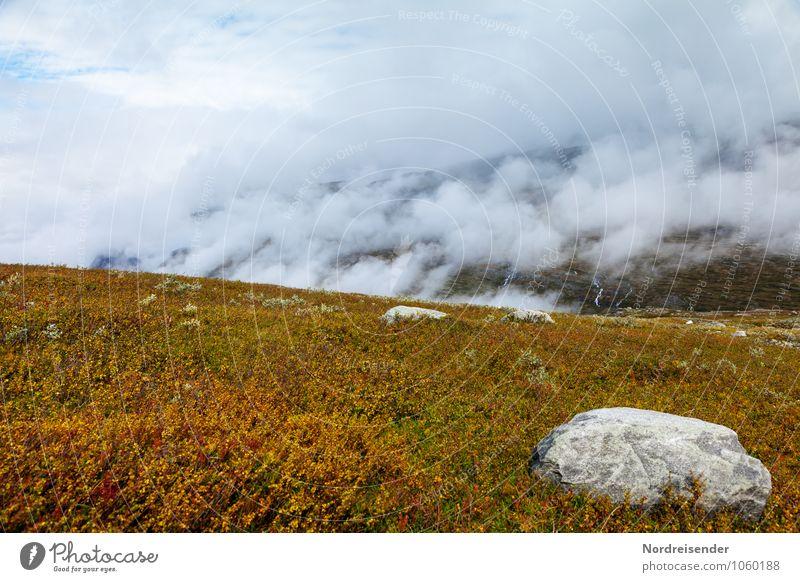 Zwergbirken Ausflug Berge u. Gebirge Natur Landschaft Pflanze Urelemente Wolken Wetter Regen Baum Wildpflanze Felsen Stein Wachstum Fernweh