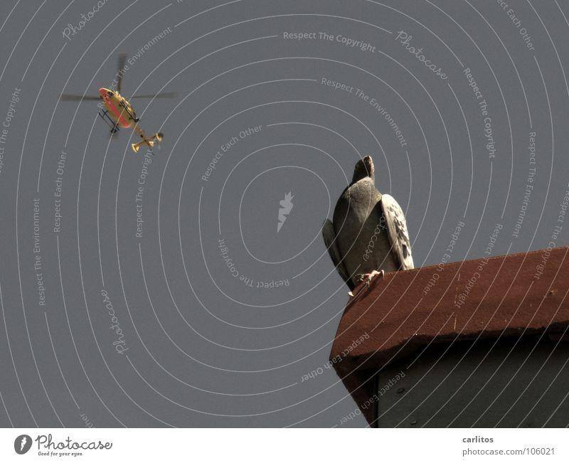 Landeanflug Sommer Vogel Hilfsbereitschaft Dach Taube Dachziegel Hubschrauber überblicken