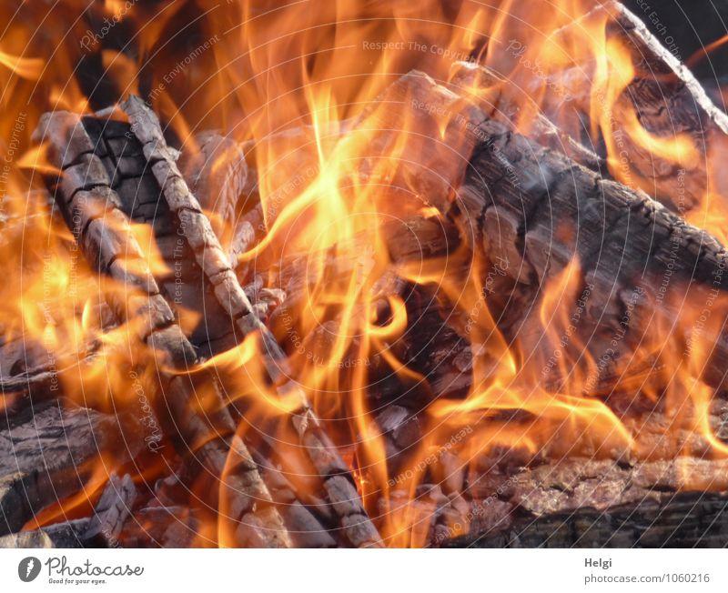 Hüttengaudi | Feuerstelle Freizeit & Hobby Holz leuchten ästhetisch authentisch braun gelb orange Stimmung Freude Lebensfreude bizarr einzigartig Idylle Flamme