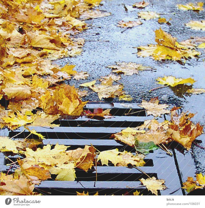 RUTSCHGEFAHR II wiederkommen auftauchen Blatt Ahorn kalt gelehrt braun Herbst Januar Februar Dezember November Ferne Fahrweg schmelzen Winter nußbraun Stengel