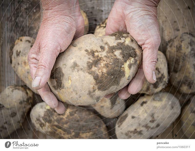natürlich kartoffelesser! Lebensmittel Gemüse Bioprodukte Vegetarische Ernährung Erwachsene Hand Finger 45-60 Jahre Arbeit & Erwerbstätigkeit beobachten