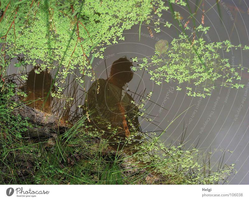 tief blicken... Teich Biotop Wasserlinsen Binsen Am Rand Gras Reflexion & Spiegelung Spiegelbild nass Blatt Blüte Wachstum Pflanze Klee Kleeblatt Herbst Mensch